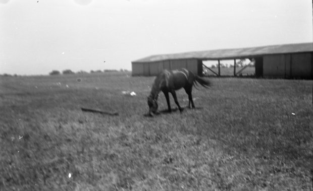 The horse stable at the Gardenville Airport with a horse grazing.