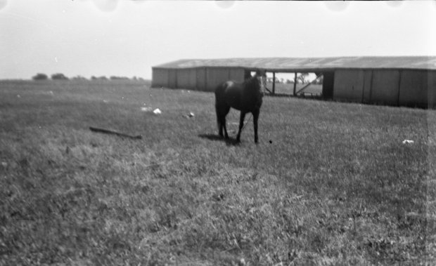 The horse stable at the Gardenville Airport with a horse looking at the camera.